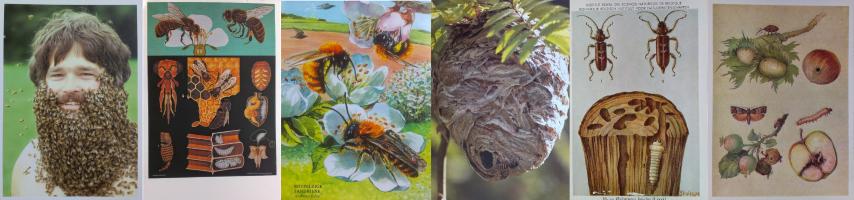 Hmyz (Small)