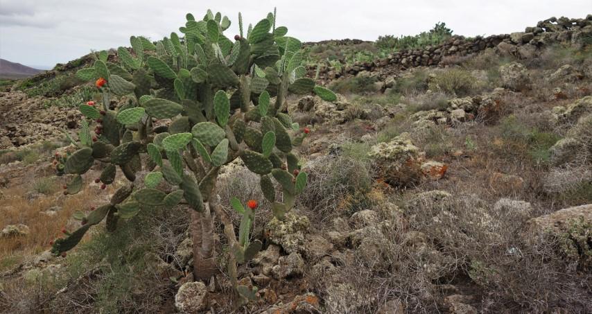 Lanzarote, opuštěné zahrádky