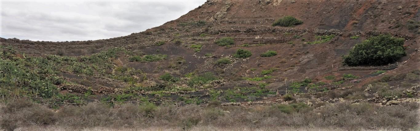Lanzarote, zahrádky na dně kaldery