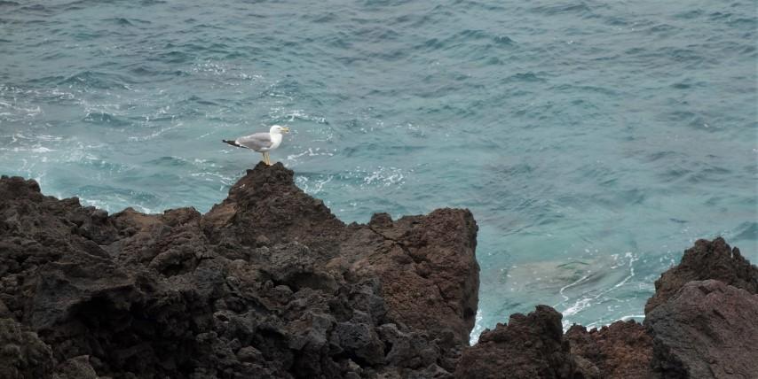 Lanzarote, osamělý racek