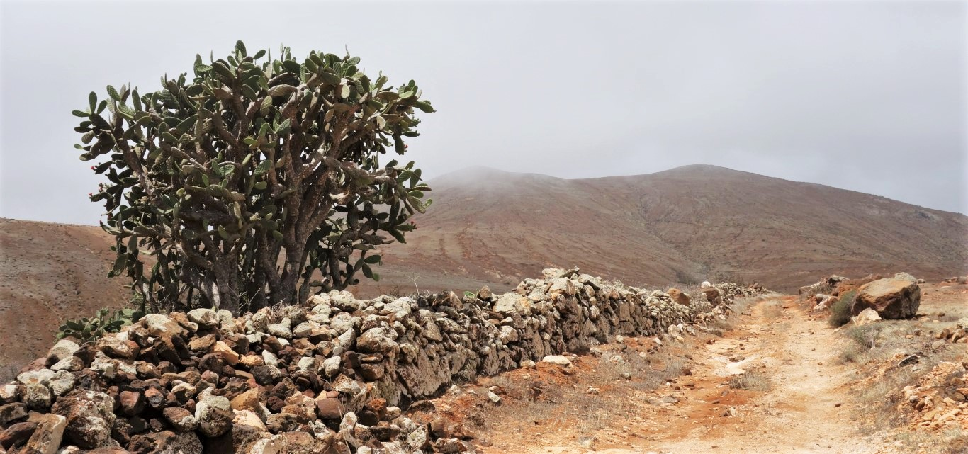 Opuncie cestou na Montaña Betancuria