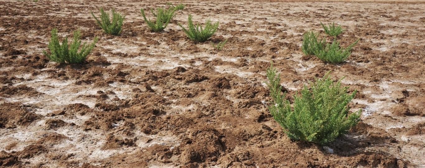 Zasolená půda slaniska