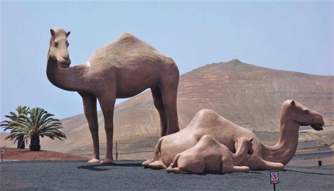 Sochy velbloudů uprostřed kruháku