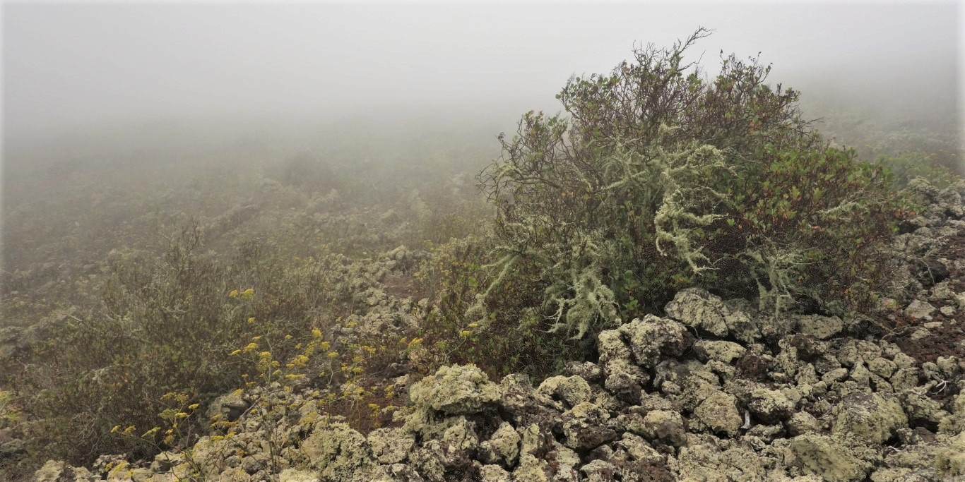 Sopečný mlžný les