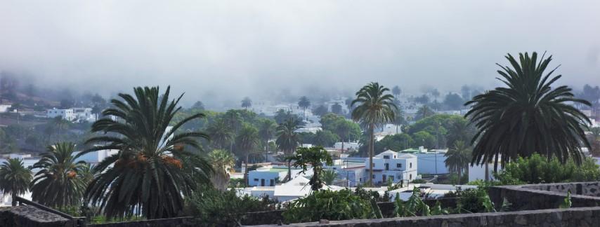 Datlové palmy v La Haría