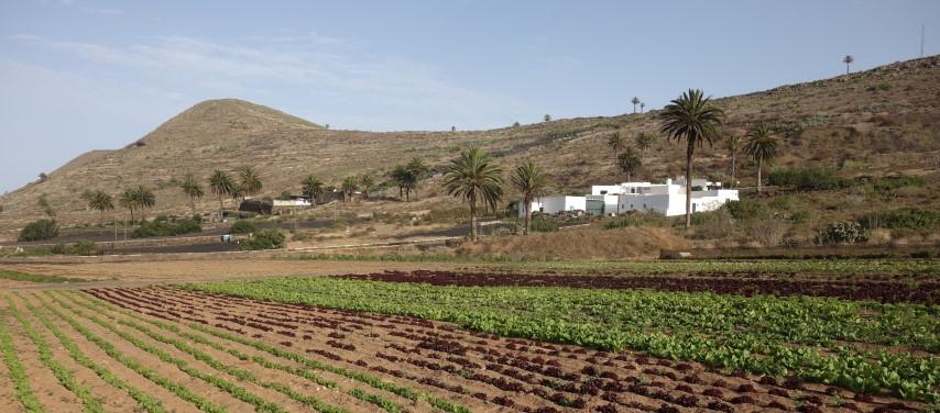 Pole u vesnice Merquez
