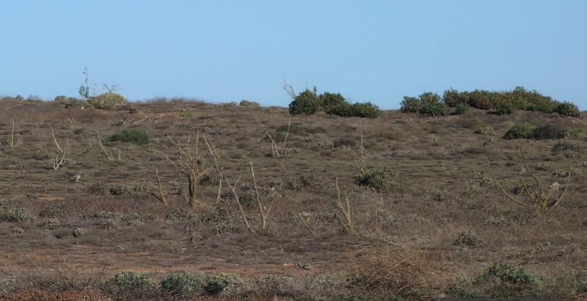 Biotop dytlíka úhorního