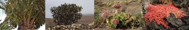 Rostliny Lanzarote (Small)