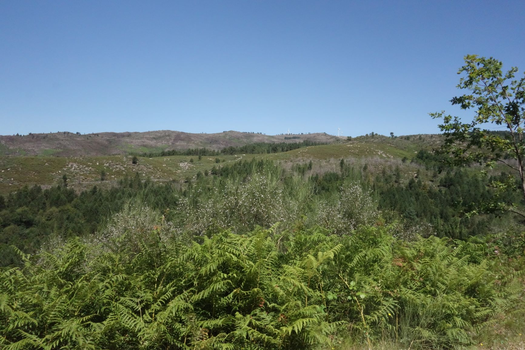 Vrcholky kopců v Serra da Cabreira
