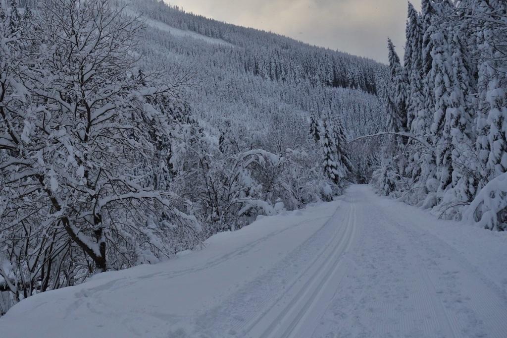 Běžkařské trasy v Krkonoších, údolím Bílého Labe ze Špindlerova Mlýna