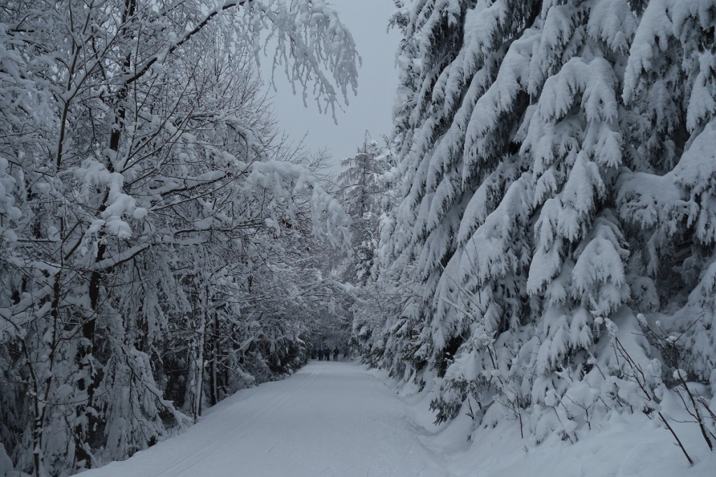 Běžkařské trasy v Krkonoších, z Benecka na Rovinka