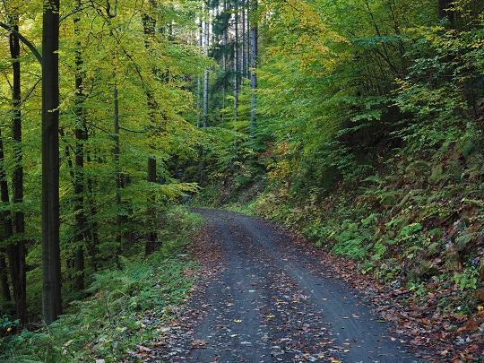 Běžkařské trasy v Krkonoších, stezka po vrstevnici na úpatí Kapradníku a Hromovky