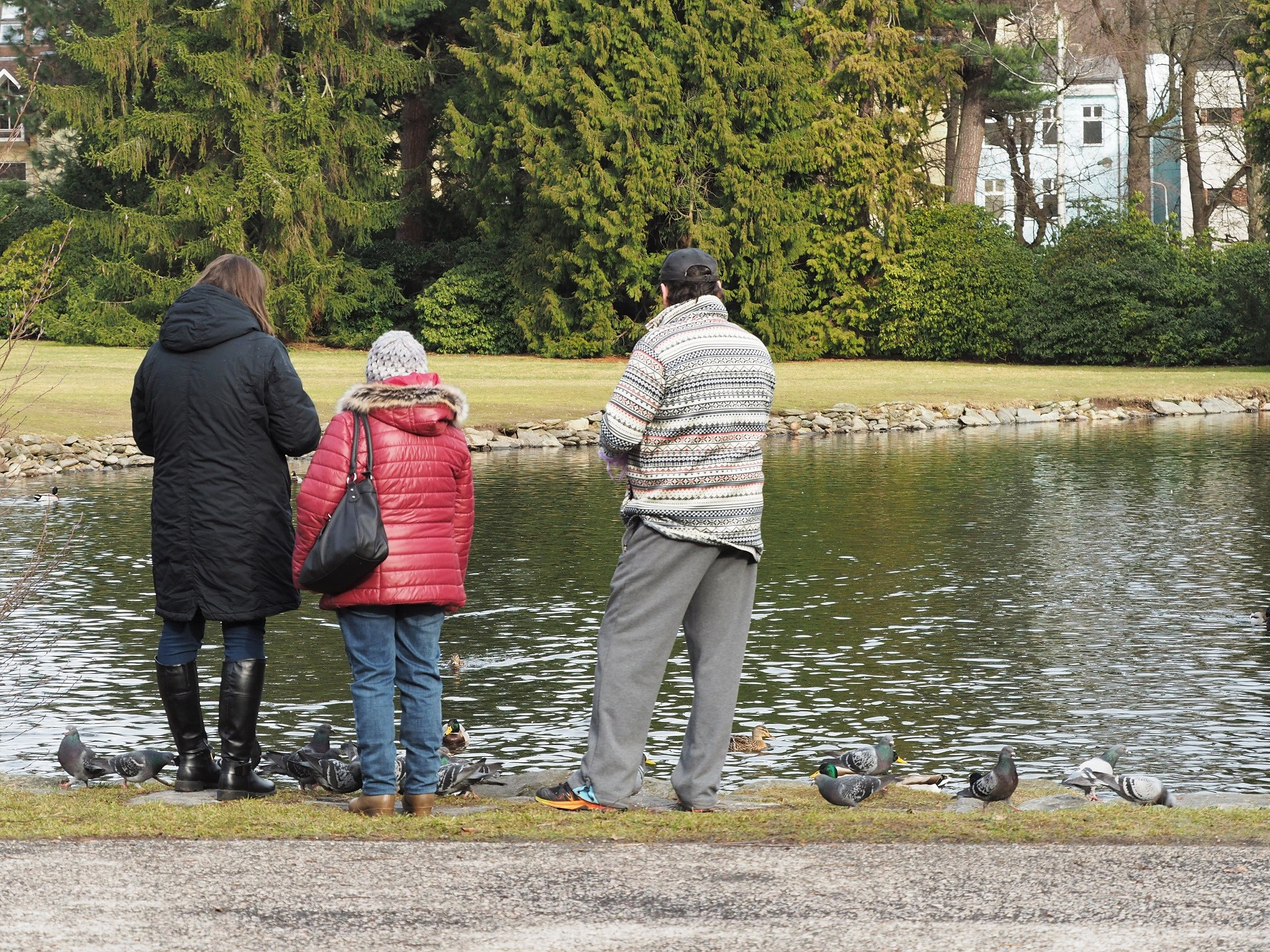 Krmení vodních ptáků