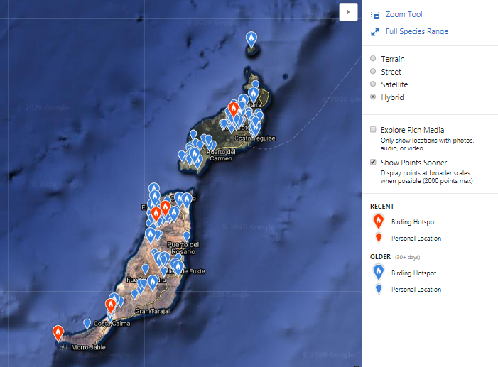 Jednotlivá pozorování dropa obojkového na Kanárských ostrovech