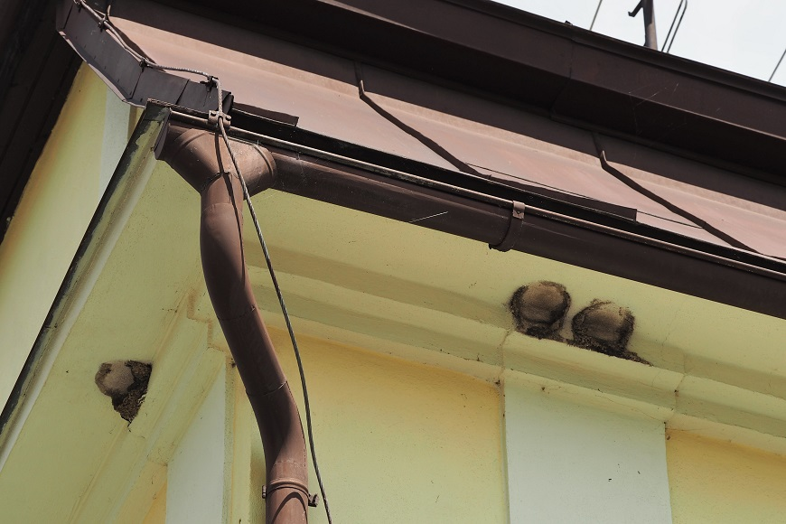 Mapování jiřiček v Krkonoších