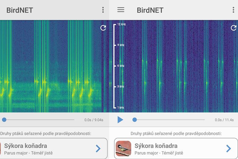 Sýkora koňadra spektrogram